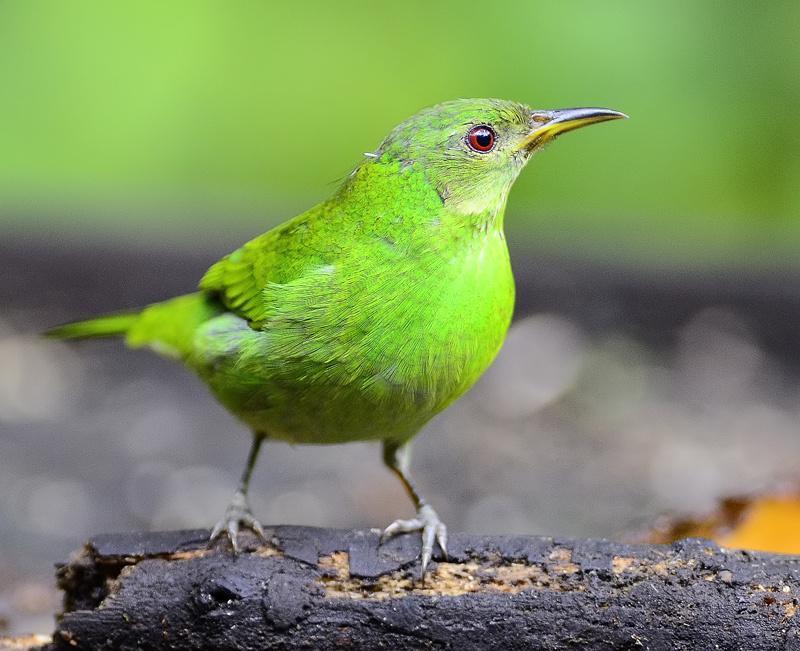 """Résultat de recherche d'images pour """"petit oiseau couleur verte"""""""